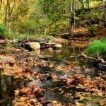 Sandstone Creek in Fitzgerald Park